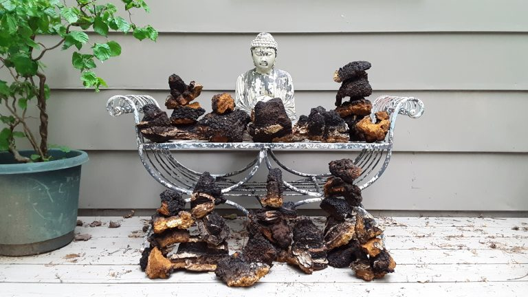 Blue Ridge Chaga Connection